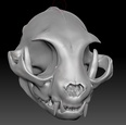 3d model the skull of cats